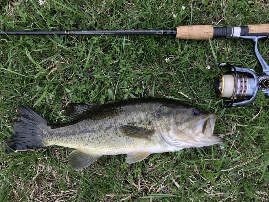 15.75'' Largemouth Bass (4-18-19)