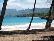 Parrot in Hawaii 051