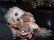 theo and new toy dec 08