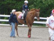 horse6