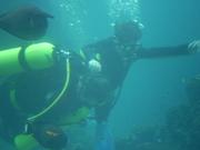 Shark Bait Boys Sea World Dive - 12-14 Dec 08 Dive 1 035