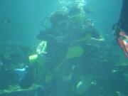 Shark Bait Boys Sea World Dive - 12-14 Dec 08 Dive 2 042