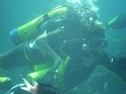 Shark Bait Boys Sea World Dive - 12-14 Dec 08 Dive 2 053 1