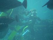 Shark Bait Boys Sea World Dive - 12-14 Dec 08 Dive 2 038