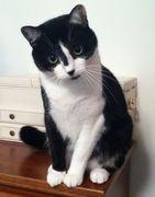 New Cat At San Pedro!!!