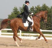 Palgrave Horse Show 2007