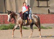 Mary the family horse