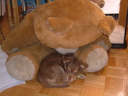 Caffelatte with his bear