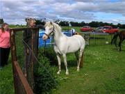 my daughters new pony-sapphire...such a doll!