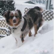 frizzle winter 2008_001