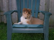 Abbey on her throne