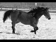 Horse 2_m