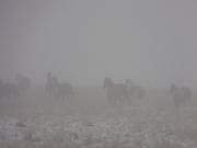horsesfog 009