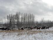 horsesmudsnow 025