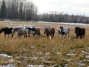 horsesmovinout 013