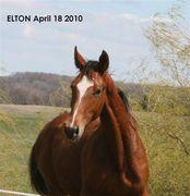 Elton headshot reduced for sending April 2010