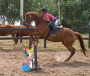 Horse Cazy