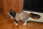 Minnie's new hair do!