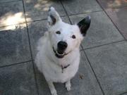 cutestdogever