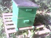 Bee Hive #1