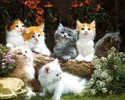 ~Kittens-