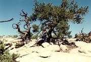 treewhatkind