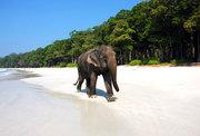 420-Andaman-Islands-Elephan-420x0