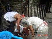cosecha de jatropha