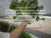 VEDO SOLUCION NUTRITIVA