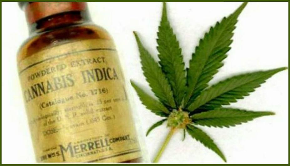 cannabis/Marihuana medicinal CURATIVA o PALIATIVO
