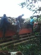 Selección y Transporte del Material Vegetal  Barbadensis Miller.