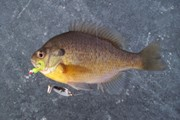 Ice Fishing New Jersey Jan/Feb 09