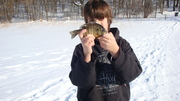 "8"" ice bluegill"