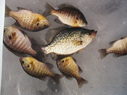 fish 010