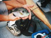 fish 034