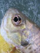 fish 004
