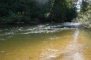 MI trout river