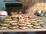 Will Fish 4 Food