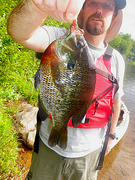 05-30-10 Trophy NY Bluegill Sunfish-Brutal Tanker Gill 10.75 inches 1.2 lbs