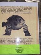 1950 article on TS Hudson's fish