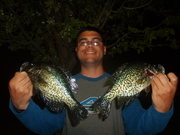 11 inch Crappies 5-6-09