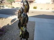saquareo fishing 11-08-11 001