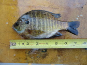 saquareo fishing 11-08-11 002