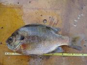 fishing 5-24 12 002