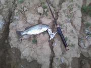 Farm Pond fiasco 2