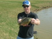 10 in. Hybrid Bluegill (3-17-12)