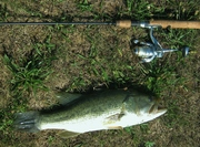 18 in. Largemouth Bass (7-10-12)