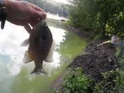 Slip Floating- Late September Midday shore fishing
