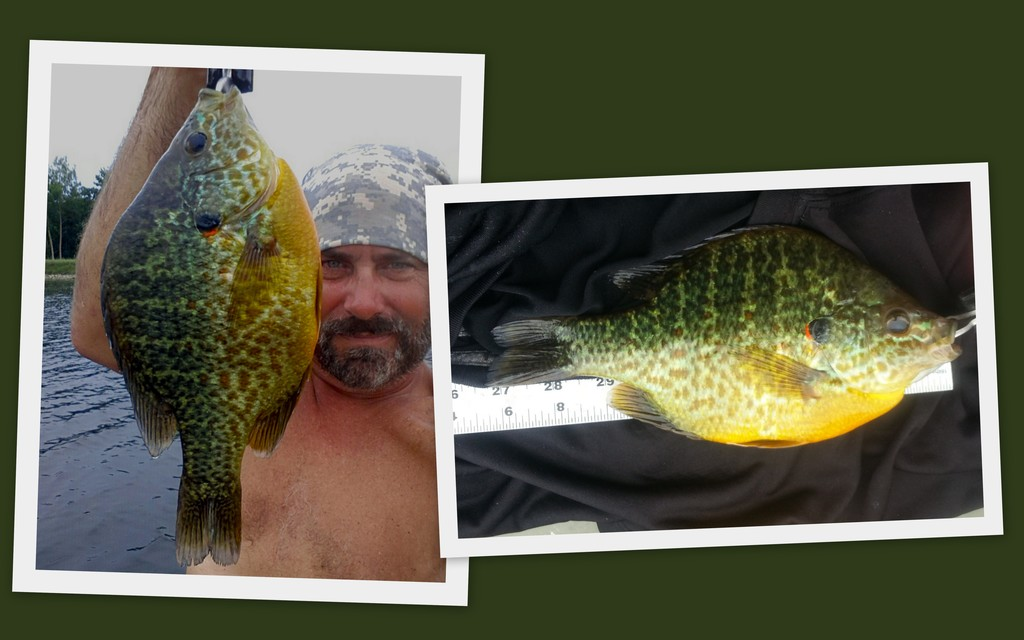 """082614-- PERSONAL BEST AND MASTER ANGLER SIZED P'SEED OF 9.375"""""""