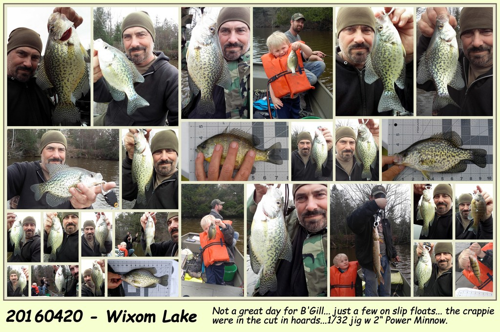 2016 Wixom Lake B.Crappie greatly outnumbered the B'Gill